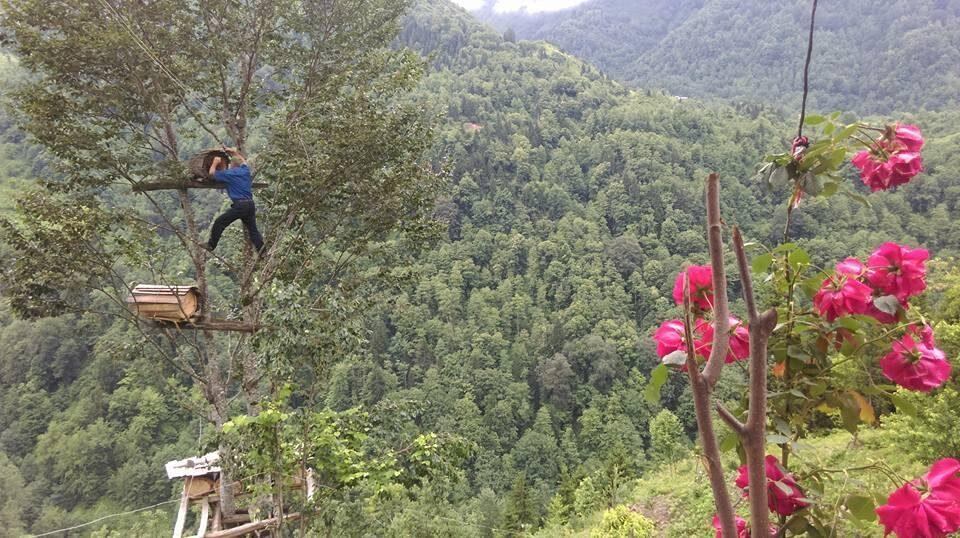 ağaç arıcılık,